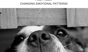 Essential Oils and Emotions, Part 4: Changing Emotional Patterns